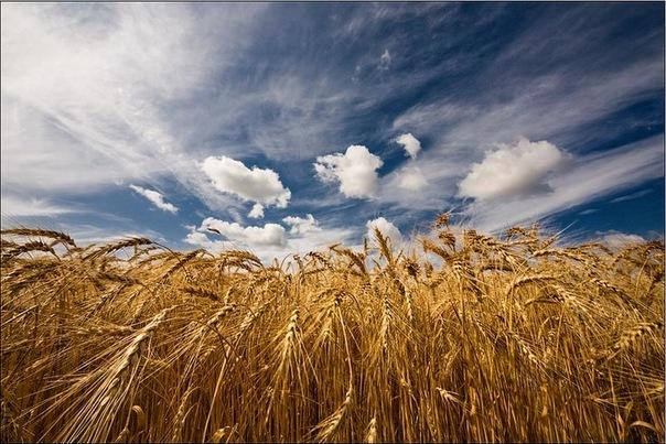 материал почти работа на поле в украине становится неотъемлемой
