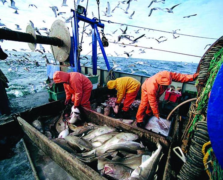 какую рыбу ловят в россии промышленно
